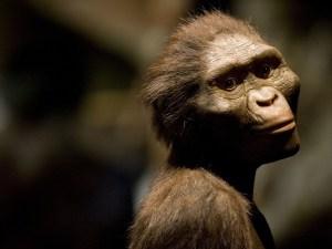 """Recrean nueva versión del rostro de """"Lucy"""", nuestra antepasada australopiteca (FOTOS)"""