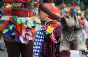 En Río de Janeiro, los perros también disfrutan del Carnaval (FOTOS)
