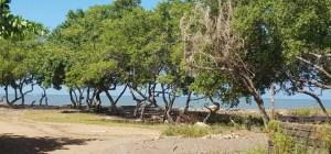 """Hallan muerto a un sujeto por identificar en la playa de """"caño salao"""" Anzoátegui"""