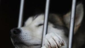 ¡Amigo fiel! Un perro espera a su dueña durante ocho horas en la puerta del trabajo (Fotos)