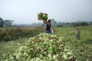UNT afirmó que el 2020 será peor para la producción agrícola del país