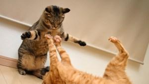 ¡QUÉ! Anciana se dejó lamer una herida por su gato… y murió de meningitis