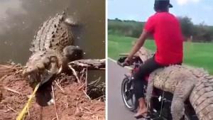 Captura de un caimán trasladado en una motocicleta causó indignación en México (VIDEO)