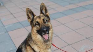 ¡Awww! El emotivo reencuentro entre una perra policía retirada y su entrenador (VIDEO)