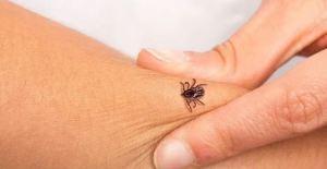 Habitantes en Delta Amacuro denunciaron que persisten las infecciones por picaduras de garrapatas