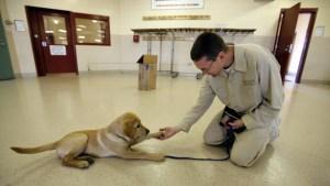 Científicos demuestran que los perros están biológicamente preparados para interactuar con los humanos