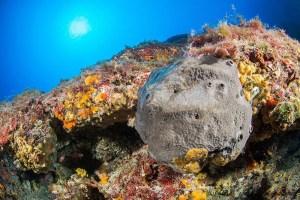 Fósiles parecidos a esponjas podrían ser la forma de vida animal más vieja del planeta