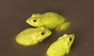 """EN VIDEO: Un """"ejército"""" de ranas amarillas invade los charcos de la India"""