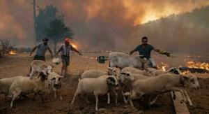 """""""Fue como una bomba"""": Un granjero turco cuenta cómo vio morir quemada a su vaca"""
